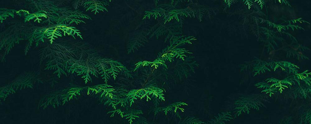 Evergreen-Social-Media-Trees